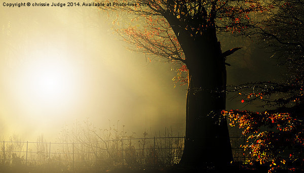 Autumn gold Canvas print by chrissie Judge