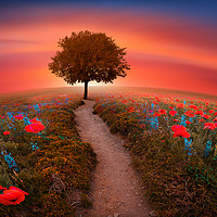 Buy canvas prints of The little Red Tree on the hill  by chrissie Judge
