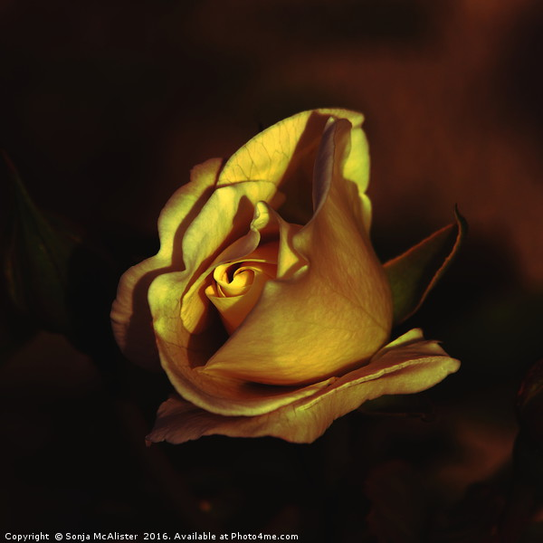 In Gold Canvas print by Sonja McAlister
