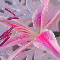 Buy canvas prints of Lily on the table by Sonja McAlister