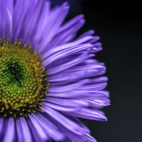 Buy canvas prints of  Flower Macro Photograph by David Siggers