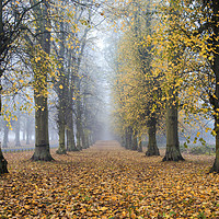 Buy canvas prints of clumber park by jason thompson