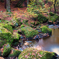 Buy canvas prints of Padley Gorge  by jason thompson
