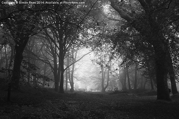 Enchanted Wood! Canvas print by Simon Rees