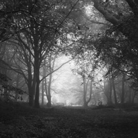 Buy canvas prints of  Enchanted Wood! by Simon Rees