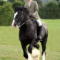 Buy canvas prints of Shire Horse doing Dressage by Christopher Grant