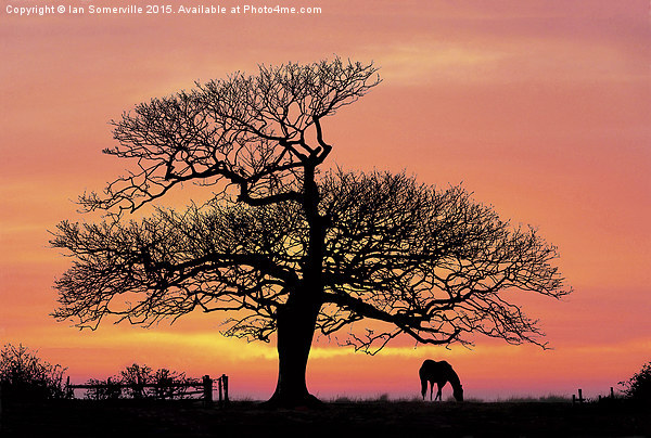silhouette at sunset Canvas print by Ian Somerville