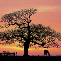 Buy canvas prints of  silhouette at sunset by Ian Somerville