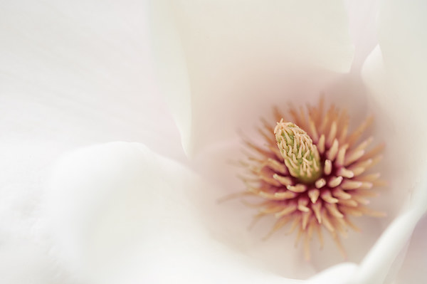 Soft Floral Canvas print by Andrew Kearton
