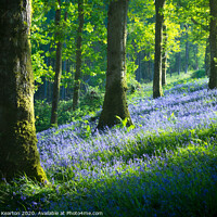 Buy canvas prints of Bluebell woodland in Snowdonia by Andrew Kearton