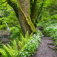 Buy canvas prints of Spring woodland path at Aberfforest, Pembrokeshire by Andrew Kearton