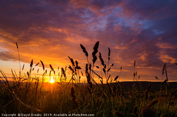 Sunset through the wheat Canvas print by David Oxtaby