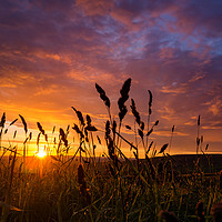 Buy canvas prints of Sunset through the wheat by David Oxtaby