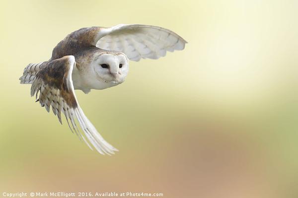 Barn Owl Inflight Canvas Print by Mark McElligott