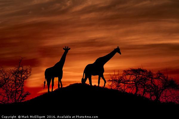Giraffe Silhouette  Canvas print by Mark McElligott