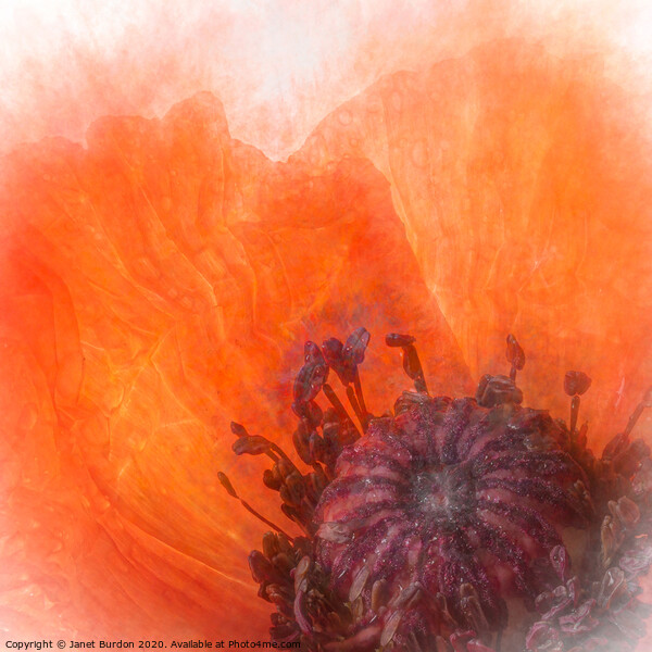 Poppy Abstract Framed Mounted Print by Janet Burdon