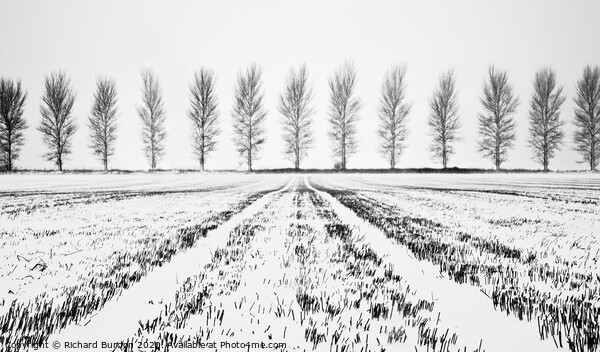 Tree Lines Print by Richard Burdon