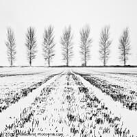 Buy canvas prints of Tree Lines by Richard Burdon