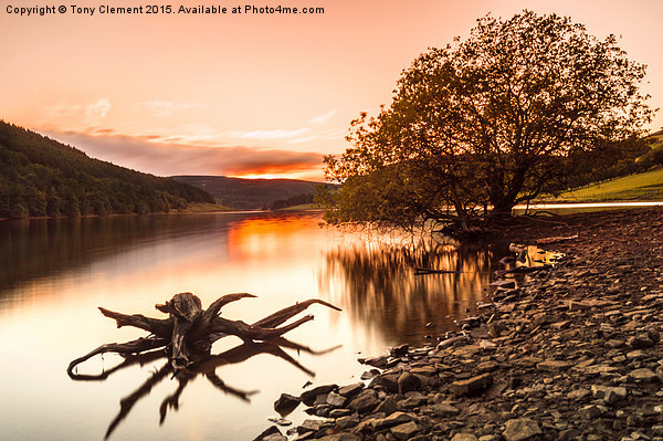 Ladybower Driftwood Canvas print by Tony Clement