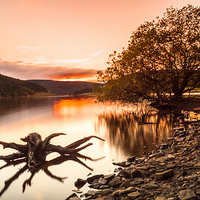 Buy canvas prints of  Ladybower Driftwood by Tony Clement