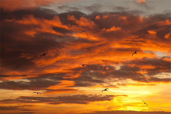 Sunset and seagulls Canvas Print by Gail Johnson