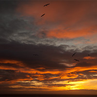 Buy canvas prints of Sunset and seagulls by Gail Johnson