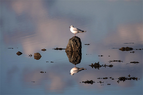 Gull Canvas print by Gail Johnson