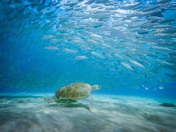 Underwater  Curacao Views Framed Print by Gail Johnson