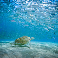 Buy canvas prints of  Underwater  Curacao Views by Gail Johnson