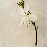 Buy canvas prints of Beauty by John Edwards