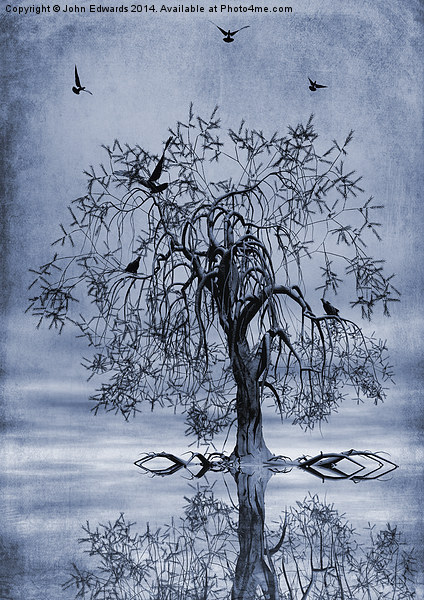 The Wishing Tree Cyanotype Canvas print by John Edwards