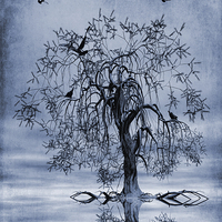 Buy canvas prints of The Wishing Tree Cyanotype by John Edwards