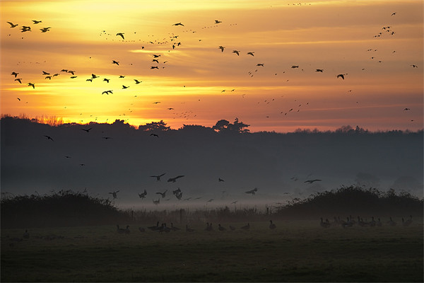 Pink-footed geese at Holkham, Norfolk, UK Canvas print by John Edwards