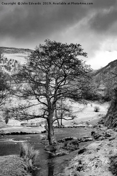 The Tree in the Dove Monochrome  Canvas print by John Edwards