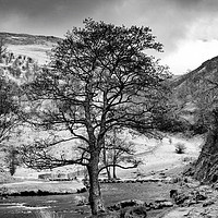 Buy canvas prints of The Tree in the Dove Monochrome  by John Edwards