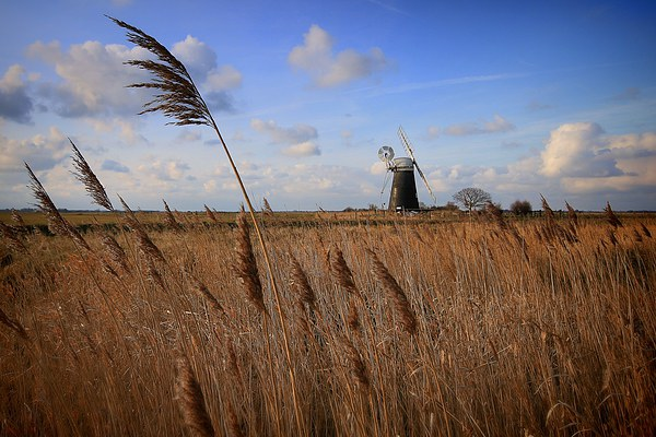 Mutton's Mill, Norfolk Framed Mounted Print by JG Photography
