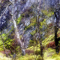 Buy canvas prints of  The colours of wet trees in rain. by Peter Jones