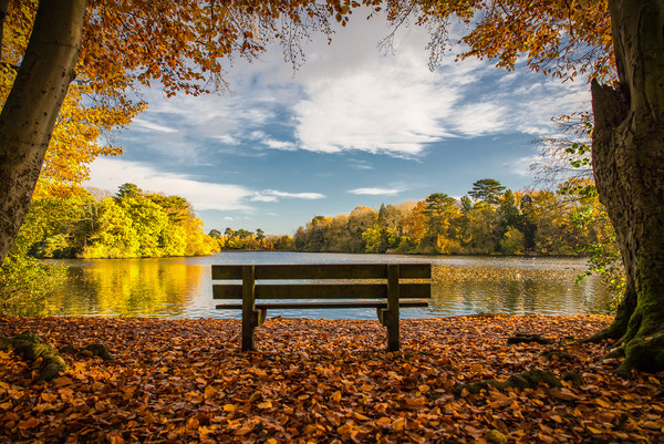 The Bench; Hartsholme Park, Lincoln Canvas print by Andrew Scott