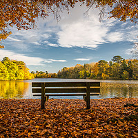 Buy canvas prints of The Bench; Hartsholme Park, Lincoln by Andrew Scott