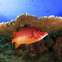 Buy canvas prints of Underwater marine fish and coral reef by Super Jolly