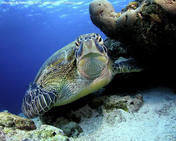 Underwater turtle Framed Print by Super Jolly