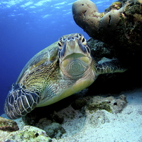 Buy canvas prints of Underwater turtle by Super Jolly