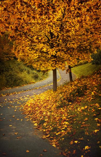 Autumn Framed Mounted Print by Svetlana Sewell