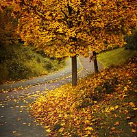 Buy canvas prints of  Autumn by Svetlana Sewell