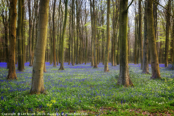 Bluebell Woods Canvas print by Len Brook