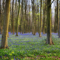 Buy canvas prints of Bluebell Woods by Len Brook