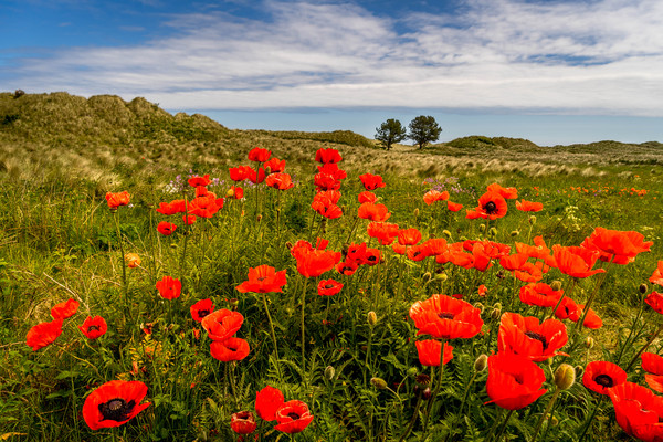 The floral beauty of Bamburgh Canvas print by Naylor's Photography