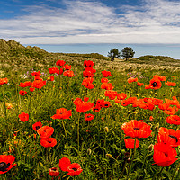 Buy canvas prints of The floral beauty of Bamburgh by Naylor's Photography