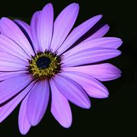 Buy canvas prints of Pink  Flower  by Ann McGrath