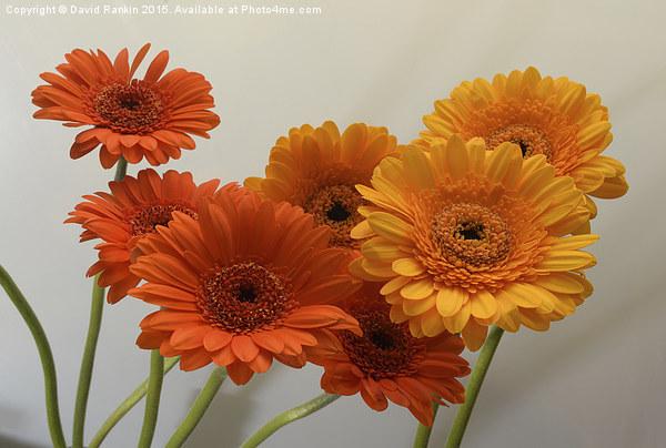 orange and yellow gerbera flowers Canvas print by David Rankin